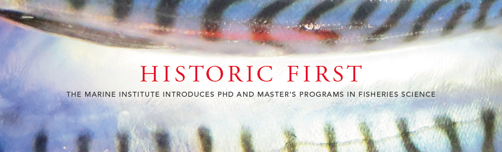 New Masters and PhD programs - banner